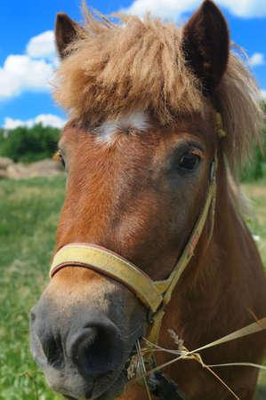 pony Stock Photo