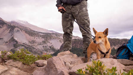 Two legs on military trousers and a small dog