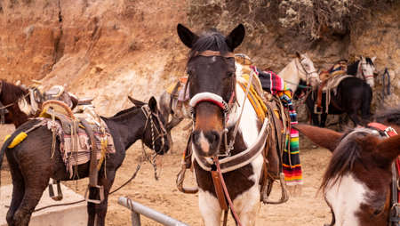 Touristic horse riding at the old mining town of Real de Catorce, Mexico