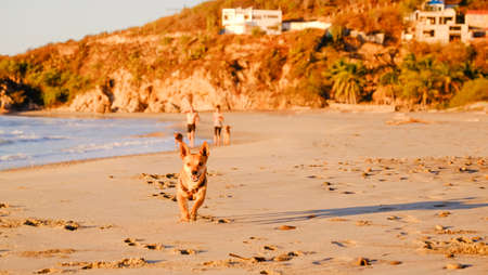 Cute small dog running at the beach during sunset Pochutla, Oaxaca, Mexico Imagens