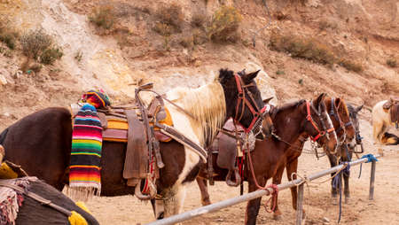 Horses for hiring at the mexican mining town of Real de Catorce Stok Fotoğraf