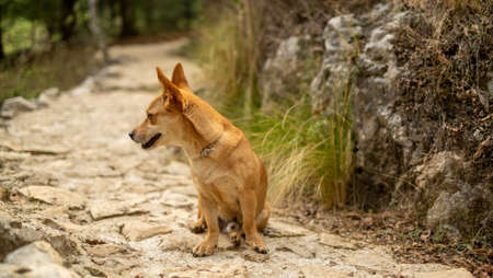 Small jack russell terrier sit at the end of the trail Standard-Bild - 131259189