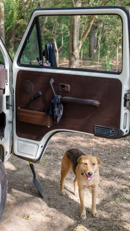 Cambao, Colombia - January, 27th, 2019: wesfalia camper van open door and stray dog 新聞圖片