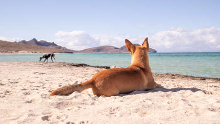 Two dogs friends enjoying paradise on a blue waters beach and sunny day Stock Photo