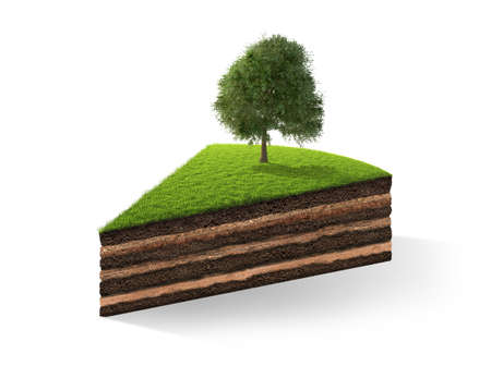 grassroots: 3d illustration of cross section of ground with grass isolated on white. 3D rendering Stock Photo