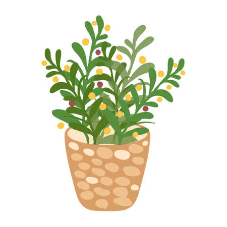 Home plant in flowerpot Vector isolated on white