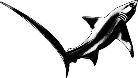 genus: this is a design for a souvenir shirt