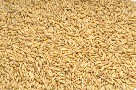 Ear of cereals and wheat cereals. Wheat isolated over white background. Stock fotó
