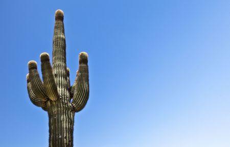 Desert cactus against a blue sky photo