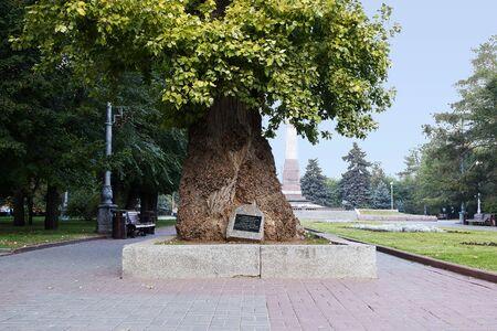 stele: VOLGOGRAD, RUSSIA - October 19, 2015: Memorial poplar is a living witness of the great Patriotic war. Square of the fallen Fighters, Volgograd, Russia Editorial