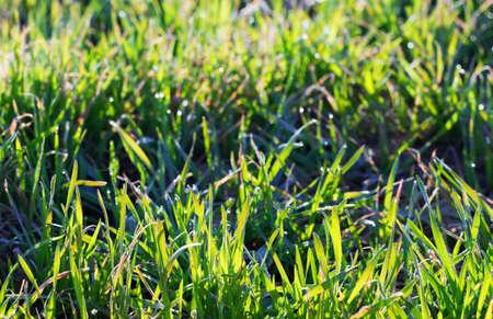 Green morning grass Stock Photo