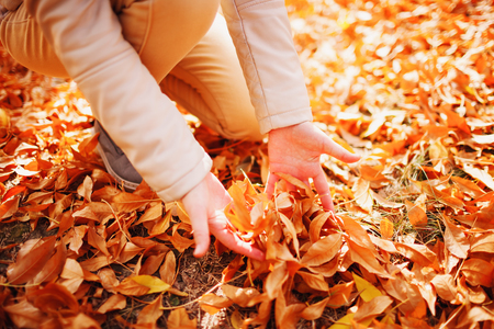 Hands collect dry yellow leaves on and from the earth