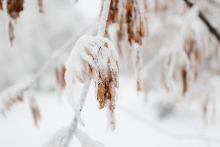The frozen bush branch covered with ice and snow in the winter. In soft focus, a close up