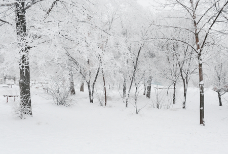 Winter landscape of the trees covered with snow in the park in the winter