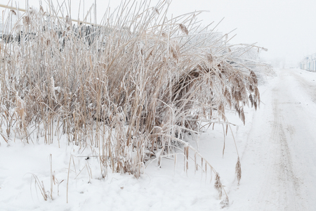 The high dry grass covered with hoarfrost and snow in the winter near the road