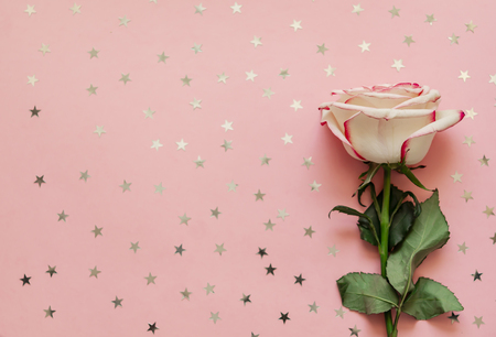 Single rose flower with holographic stars on pink background. Stock fotó