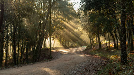 I walk in the middle of the forest with rays of the sunrise