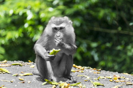 Cutey monkey was eating banana, throw peel everywhere, the way it bite was attractive, and i shot it far away with my zoom lens and dont make any disturb. I make the monkey and floor back and white, keep colour for background and peel, try to make the monkey outstanding from colour.