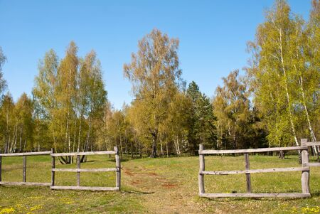 oaken: Spring in white birch forest with fence Stock Photo