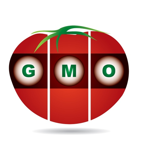 gm: genetically modifies plants, tomato - agricultural concept