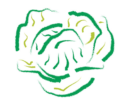 broader: Hand drawing Cabbage, abstract illustration on white background