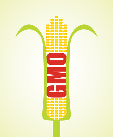 genetically modified crops: Genetically modified maize, agricultural concept, abstract illustration