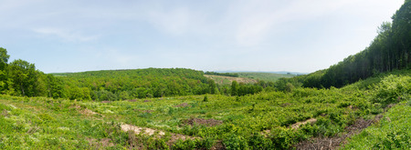 Clear-cutting in Romanian mixed forrest.