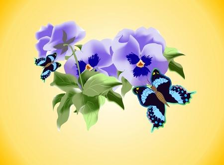 pansies: spring Illustration