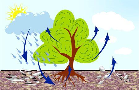 precipitation: water circulation