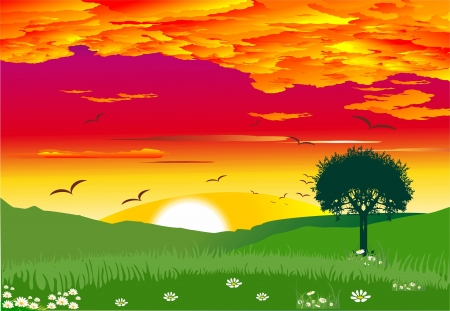 sunset in the countryside Vector