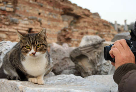 Photographer taking photo of cat. Cat and photographer. photo
