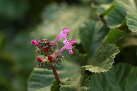 Beautiful pink flowers with green leaves in garden. photo