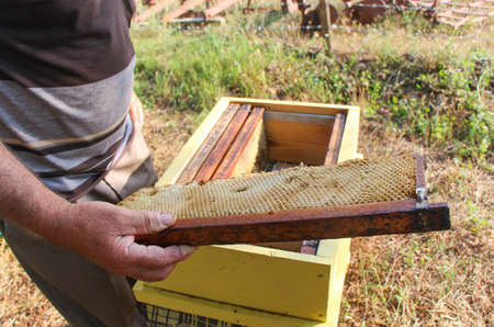 Beekeeper holding a frame of honeycomb. The beekeeper has control over a framework with honey. photo