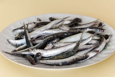 european anchovy: Fresh anchovies. Fresh anchovies in a dish. Stock Photo