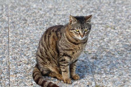Cat sitting on the sidewalk. photo