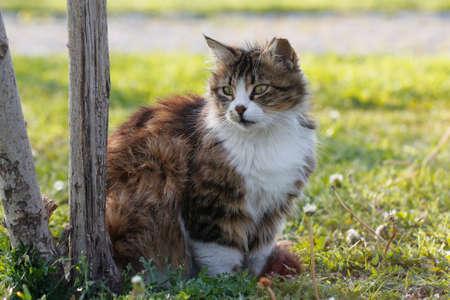 Cat against green background. Cat in autumn garden on grass. photo