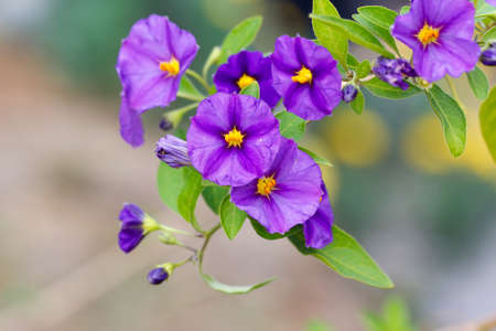 macro flower: Spring floral background. Purple flowers hanging. Purple flowers background.