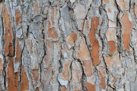 bark texture: Tree bark texture