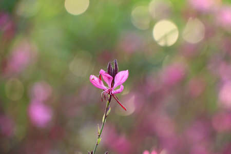 filters: Pink flower background. Beautiful flowers made with color filters. Stock Photo