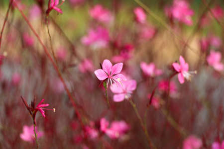 colorize: Pink flower background. Beautiful flowers made with color filters. Stock Photo