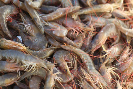 camaron: Pila de camarones frescos para retailsale en el mercado local. Reci�n pescados camarones.