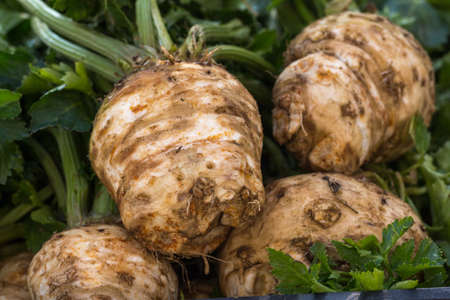 celery root: Organic celery. Celery root and leaves of celery. Stock Photo