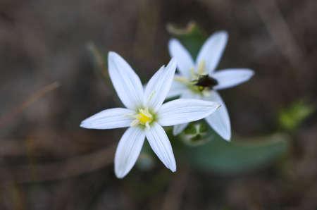 Prachtige wilde bloemen in het bos. Witte bloemen, close-up. Stockfoto