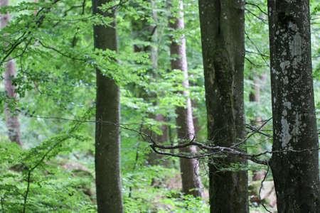 Bekijk de binnenkant van het bos op de bomen. North scandinavische dennenbos, Zweden natuurlijke reizen buiten.
