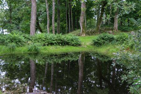 Weerspiegeling van bomen in het meer. Zweedse zomer uitzicht. Stockfoto