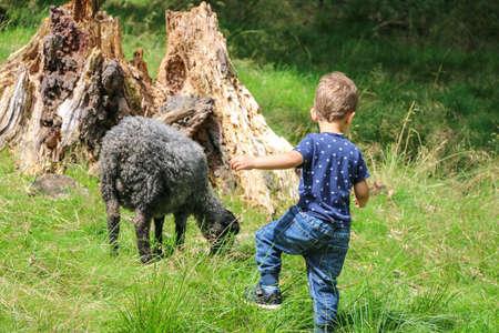 Weinig jongen met zwart lam op de boerderij.