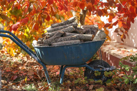 Firewood lies in a wheelbarrow, ready for a fire. Colorful autumn garden. Preparation for the winter.