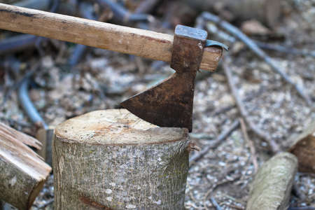 Old heavy ax tool impaled in log and fragments of alderwood behind it, hatchet tool splitting wood stumps and chopped logs lying on the ground.