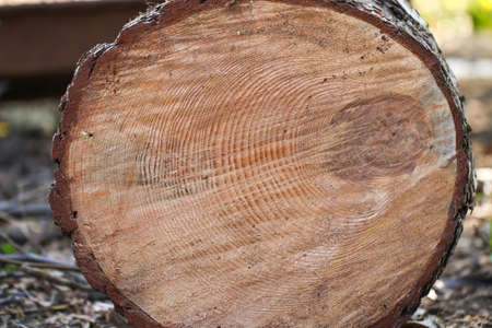 consist: Cut of old trunk. The core of tree consist of growth rings and deep cracks. Stock Photo