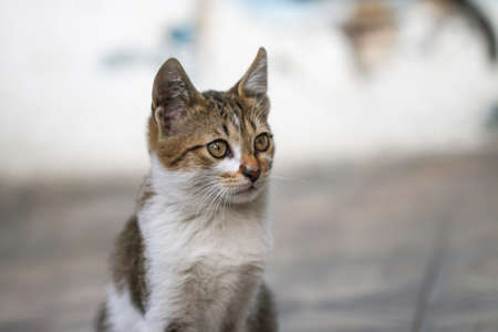 lia: Portrait of green - eyed cat. Stock Photo